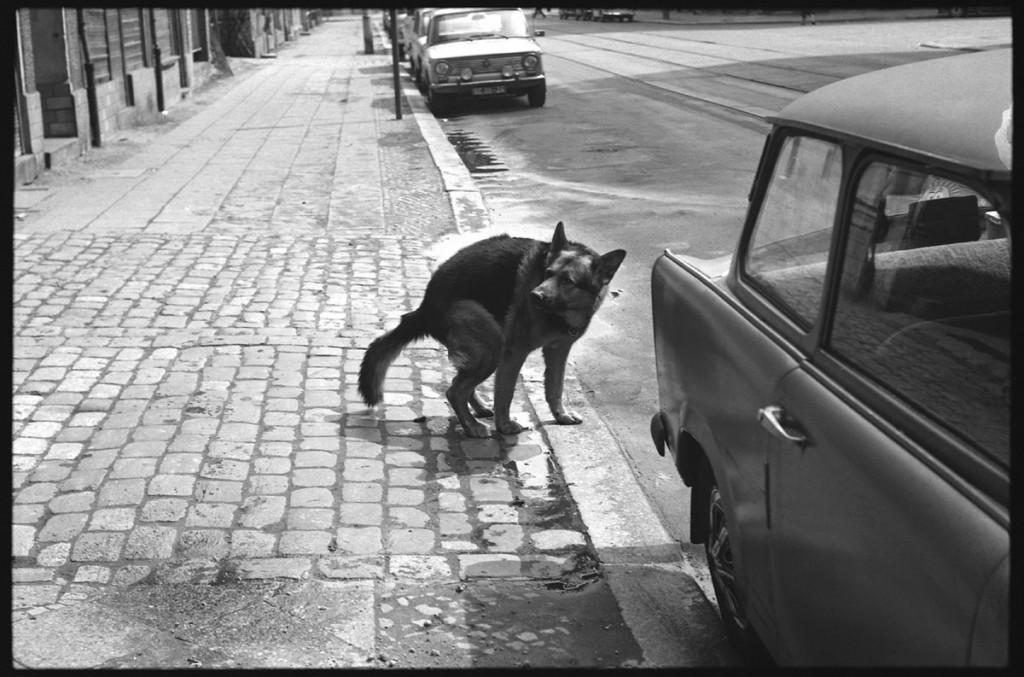 Der Hund namens Krause, benannt nach seinem Herrchen, der ihn beim Spielen verloren hat, konnte zum Kacken gehen selbst die Türen öffnen. 19??? Foto: Florian Günther
