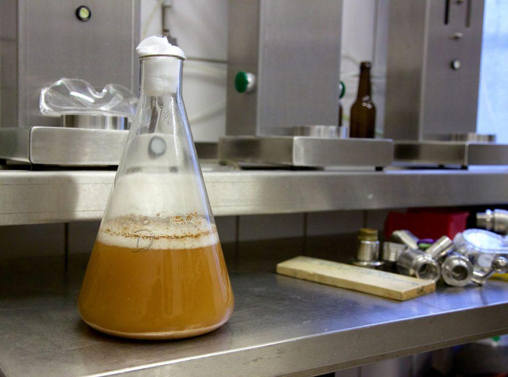 Hefe-Würze-Gemisch im Erlenmeyerkolben in der Brauerei Flessa, Foto: Anne Winkler