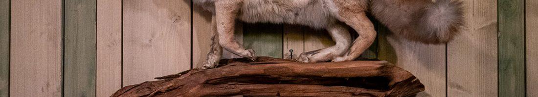 Tierisches in Berlin | Foto: Giovanni Lo Curto