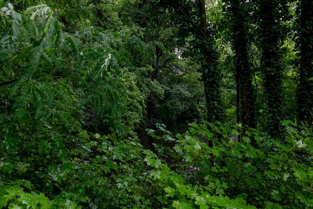 Berlin Jungle - Kennen Sie die Orte?   Foto: Giovanni Lo Curto