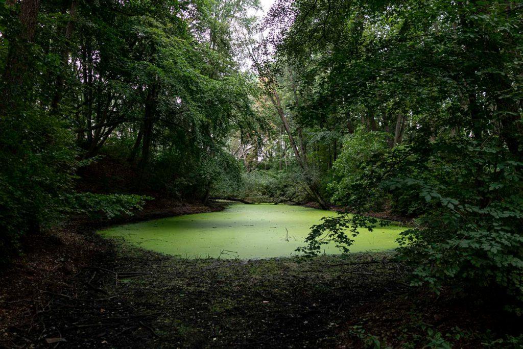 Berlin Jungle - Kennen Sie die Orte? | Foto: Giovanni Lo Curto