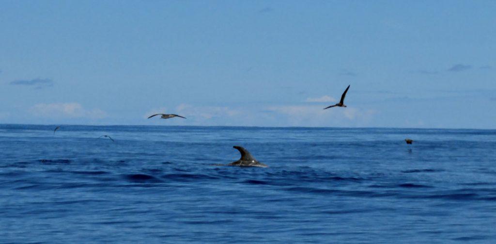 Tümmler im Ozean | Foto: Detlef Krenz